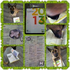 Spel 16 (hondenspel hond spel denkwerk hersenwerk brain dog game play diy)  www.facebook.com/denkspellenvoorjehond