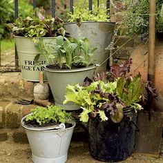 painted buckets for vege's...splendid