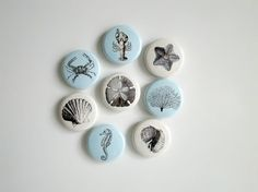Fun sea life theme magnet set in soft aqua and sand colors for great beach house decor. Perfect for holding photos, shopping lists or notes on your fridge or file cabinet. The details:  • Set size - 8 magnets 1 in diameter (about the size of a quarter) • Super strong ceramic magnets can hold several pieces of paper • Wipe with damp cloth to clean • Shipped with a complimentary coaster • Kraft gift box with red stretch loop bow available (choose gift box option from menu)  You can see more…
