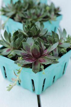 Diy Repurposed Succulent Planter On Diane S Vintage Zest