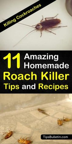 Discover amazing DIY cockroach repellent recipes and home remedies for killing roaches. Learn how to use simple ingredients, like sugar, baking soda, and bay leaves to create roach spray and traps that kill cockroaches. How To Kill Cockroaches, Killing Roaches, House Cleaning Tips, Cleaning Hacks, Floor Cleaning, Spring Cleaning, Cockroach Repellent, Insect Repellent, Roach Killer
