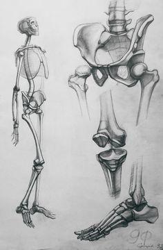 Human Anatomy Drawing, Human Body Anatomy, Human Figure Drawing, Life Drawing, Anatomy Sketches, Art Drawings Sketches, Skeleton Drawings, Human Skeleton, Body Reference Drawing
