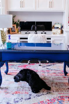 dog laying on colorful rug in jennifer allwood's home office Small House Decorating, Decorating Tips, Feminine Home Offices, Rug Texture, Room Rugs, Home Office Design, Rugs In Living Room, Colorful Rugs, Home Projects