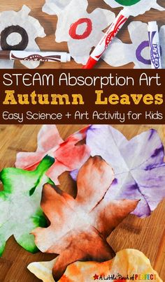 Autumn Leaves STEAM Absorption Art: Kids can watch coffee filters magically change colors as they learn about leaves. With supplies you probably have on hand, this easy activity will make for a great fall afternoon where science meets art. Kids can also enjoy using their leaves as fall decorations! #preschool #kindergarten #firstgrade #artideas #fallleaves #stemactivity #classroom #learning