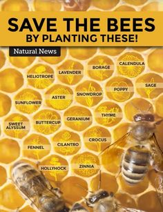Plant these to feed the bees! : gardening