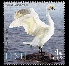 Bird of the Year 2007 was a swan - issued by Estonia. #bird #stamps http://www.wopa-stamps.com/index.php?controller=country&action=stampRelatedIssue&id=9048,,like