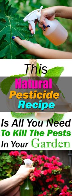 Pesticide Recipe Is So Effective You Can Get Rid Of Pests In No Time This homemade pesticide recipe is CHEMICAL FREE, all natural and easy to prepare. 5 effective ingredients together and your plants will be free of pests.This homemade pesticide recipe is Pesticides For Plants, Natural Pesticides, Growing Plants, Growing Vegetables, Organic Insecticide, Organic Gardening Tips, Gardening Hacks, Urban Gardening, Vegetable Gardening