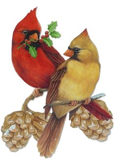 CHRISTMAS MALE AND FEMALE CARDINALS CLIP ART