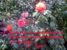 Πάπαλα - Papala: Σκασίλα, του Πλανητάρχη, μεγάλη και δέκα παπαγάλοι...