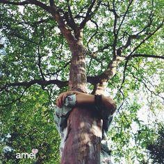 Abrace ABrace abrace ABRace abra-se para a natureza, ame esse presente da vida Dia da árvore  ️parabéns Florinda!!! #lojaamei #diadaarvore #arvore #grata #dialindo #abraço #amor #natureza