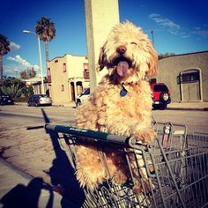 Instagram's Most Aww-Worthy Animals #refinery29  http://www.refinery29.com/2013/12/59071/instagram-contest-animals#slide8