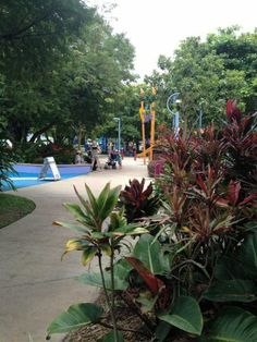 Muddy's playground is a fun and cooling place to take kids on the esplanade, Cairns.