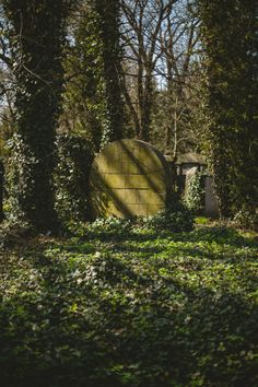 #photography #photostory #jewishcementery #poland #sunlight #ivy #antique #monumental