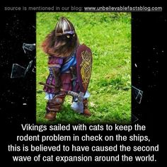 Vikings sailed with cats to keep the rodent problem in check on the ships, this is believed to have caused the second wave of cat expansion around the world. Wtf Fun Facts, Funny Facts, True Facts, Funny Memes, Viking Facts, Viking Life, Vegvisir, Unbelievable Facts, Animal Facts