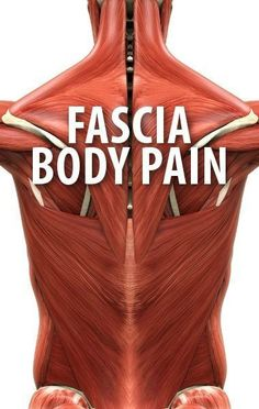 When our fascial system is troubled, it affects our entire existence: Our attitude, our energy, our health, our mobility. Restricted fascia reduces or stops the flow of nutrients to and waste away from our cells. This is called respiration. Respiration is essential to cellular function. If our cells can't function properly, they can become ineffective or even die. When ineffective, they can behave improperly or mutate. www.FasciaBlaster.com Dr. Oz, Fascia Blasting, Roller Workout, Foam Roller Exercises, Massage Therapy, Massage Envy, Massage Tips, Massage Techniques, Physical Therapy