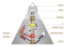 The Human Design System groups people into 4 specific types: Manifestors, Generators, Projectors and Reflectors. There are 9 centers in the Bodygraph: Head, Ajna, Throat, G, Heart / Ego, Sacral, Root, Spleen and Solar plexus. Centers are areas of special energetic significance in our body. As such, they represent certain types of energies as well as govern the functioning of their associated organs and functions in the body (for example G center is responsible for the liver and blood).