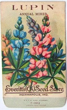 EVERITT'S SEED STORE,  1910's, Vintage Seed Packet