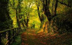 Resultado de imagem para magic backgrounds forest