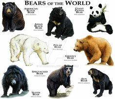 Bears of the World by rogerdhall on DeviantArt - You can see sloth bears and black bears at the Montgomery Zoo Bear Species, Animal Species, Nature Animals, Animals And Pets, Cute Animals, Types Of Animals, Unique Animals, Urso Bear, Tier Zoo