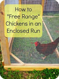 "Greneaux Gardens: How to ""Free Range"" Chickens in an Enclosed Run Do you have an enclosed coop but wish your chickens could eat more natural greens like free range chickens? Here is an easy fix!"