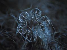 Picture of snowflake: very clear and symmetrical snow crystal with broad arms, glittering on dark blue textured background