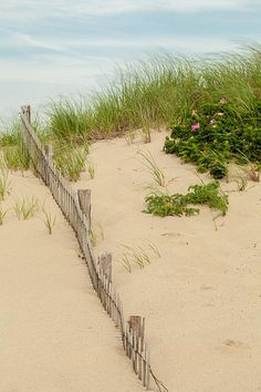 Cape Cod National Seashore Province Lands - Massachusetts