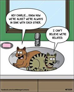 Scott Metzger Draws These Adorably Funny Kitty Cartoons And We Just Had To Share