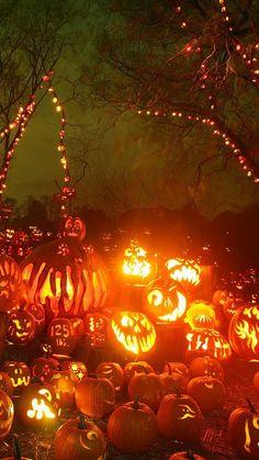 Halloween Poster, Halloween Images, Halloween Jack, Halloween Prints, Spirit Halloween, Vintage Halloween, Halloween Pumpkins, Happy Halloween, Halloween Halloween