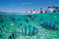 Fiji, Clean Water And Blue Sky... One day we will meet!!