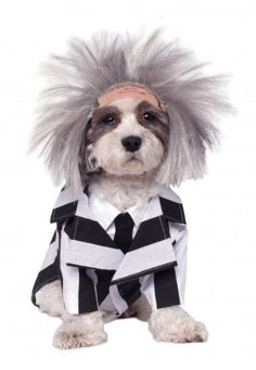 Beetlejuice is ready to haunt your home and yard in our Beetlejuice Dog Costume. This Beetlejuice Dog Costume includes a striped jacket and dog wig. Pet Halloween Costumes, Pet Costumes, Dog Halloween, Halloween Fancy Dress, Halloween Outfits, Costume Ideas, Halloween Ideas, Spirit Halloween, Halloween Rocks