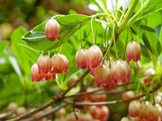 Best Shrubs for Gardeners in New England