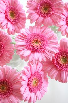 I love daisies - especially blue and pink