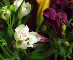 Rennaisance in a Flower Bowl Flower Bowl, Rose, Flowers, Plants, Photography, Image, Pink, Photograph, Fotografie