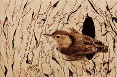 Woodburning art--Photorealistic wood burning art of a bird by Julie Bender.