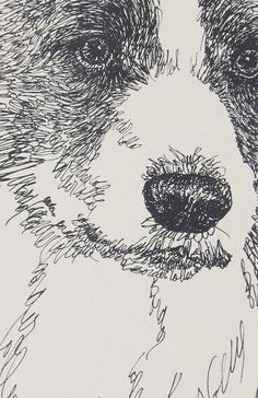 Border Collie dog art portraits, photographs, information and just plain fun. Also see how artist Kline draws his dog art from only words at drawDOGS.com #drawDOGS http://drawdogs.com/product/dog-art/border-collie-dog-portrait-by-stephen-kline/