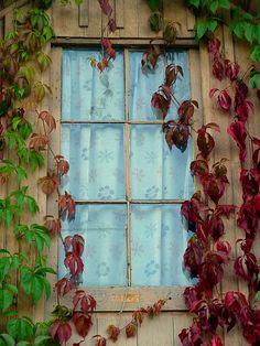 Charming window in AMIENS, FRANCE by PAROSCAR, via Flickr