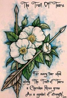 For every tear shed along The Trail of Tears a Cherokee Rose grew as a symbol of strength! Cherokee Indian Tattoos, Native American Tattoos, Native Tattoos, Native American Cherokee, Native American Quotes, Native American Symbols, Native American Indians, Cherokee Indian Quotes, Native Quotes