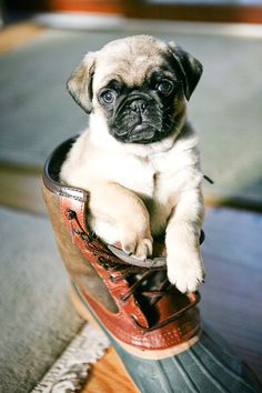 This would be perfect in Nate's Marine boots with his dog tags hanging from the puppy's mouth! <3