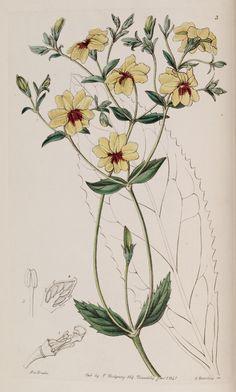 v. 27 (1841) - Edwards's botanical register. - Biodiversity Heritage Library