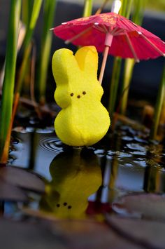 Peeps Reflection.  A little rain wont hurt you...unless maybe if your made of sugar #ExpressYourPeepsonality
