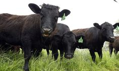 It's The Beginning Of The End For Meat Raised With Antibiotics | The Huffington Post