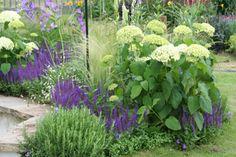 'The Angel Garden' Hampton Court Flower Show 2005 Planting by Fiona Miley Design by Rajka Popovic...Annabelle Hydrangea,Rosmarinus officinalis(f), voila cornuta(f-ground),purple spikes Salvia 'Ostfriesland',Stipa tenuissima 'Pony Tails' & Veronicastrum virg. 'Lavendelturm