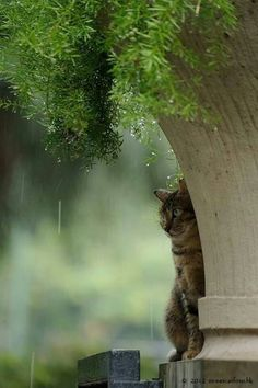 Cat in the rain under plant