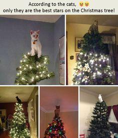 4d94560eadb89  funny  funnyanimal  cat  Christmas Follow me in Instagram   https