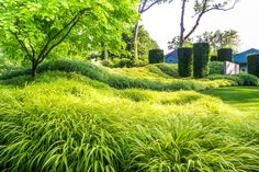 A New Jersey project by Land Morphology includes 10,000 plugs of bamboo grass in four shades. With the addition of clipped hornbeam pillars, the rolling berm recalls a giant caterpillar.  | Architectural Digest