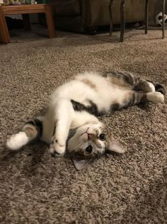 This fella has been in this pose for the past 5 minutes. by 69Madpussyonlock69 cats kitten catsonweb cute adorable funny sleepy animals nature kitty cutie ca