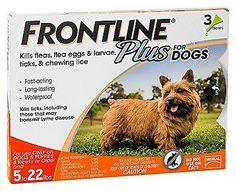 Dog Tick Prevention