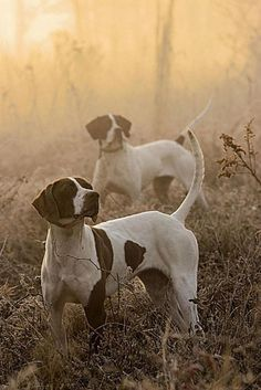 Bird Dogs on Alert by Magnolia Bloom  #dogs #hunting