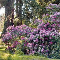 Potées et jardinières à installer dans un jardin ombragé - Arbustes fleuris