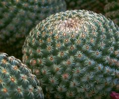 Starry Night: Pettable Cactus by cobalt123